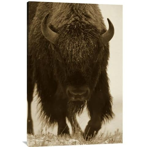 Global Gallery Tim Fitzharris 'American Bison Portrait in Snow, North America' Stretched Canvas Art