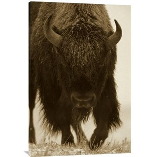 Big Canvas Co. Tim Fitzharris 'American Bison Portrait in Snow, North America' Stretched Canvas Art