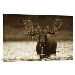 Global Gallery Tim Fitzharris 'Moose Male Raising its Head While Feeding on the Bottom of a Lake, North America' St