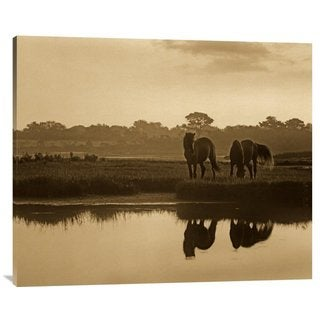 Global Gallery Tim Fitzharris 'Wild Horse Pair Grazing at Assateague Island National Seashore, Maryland' Stretched
