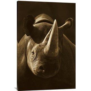Global Gallery San Diego Zoo 'Black Rhinoceros Portrait' Stretched Canvas Art