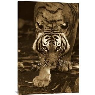 Global Gallery San Diego Zoo 'Bengal Tiger Approaching' Stretched Canvas Art