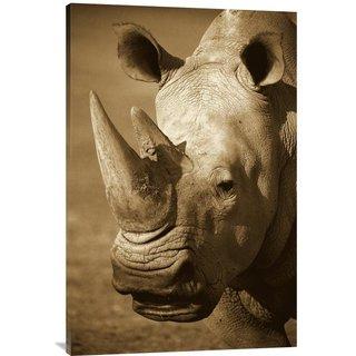 Global Gallery San Diego Zoo 'White Rhinoceros Portrait' Stretched Canvas Art