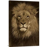 Global Gallery San Diego Zoo 'African Lion Male Portrait' Stretched Canvas Art