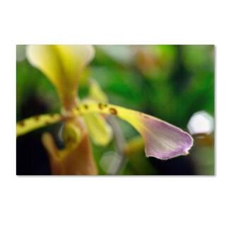 Kurt Shaffer 'To Touch an Orchid' Canvas Art