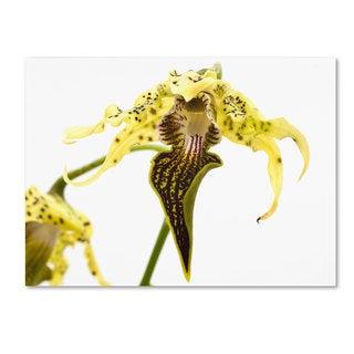 Kurt Shaffer 'Wild Looking Orchid' Canvas Art