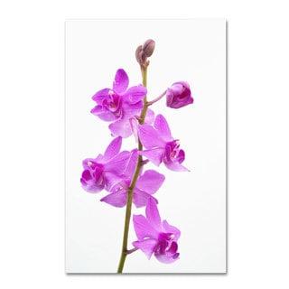 Kurt Shaffer 'Purple Orchids' Canvas Art