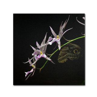 Kurt Shaffer 'Spider Orchid and Owl Eye' Canvas Art