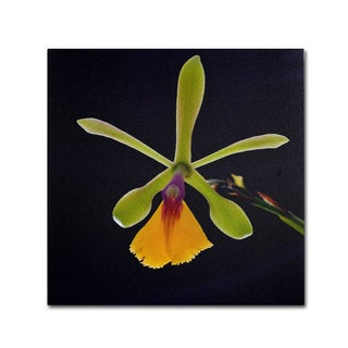Kurt Shaffer 'Orchid #1' Canvas Art