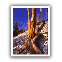 Dean Uhlinger 'White Mountains Afternoon' Unwrapped Canvas - Multi
