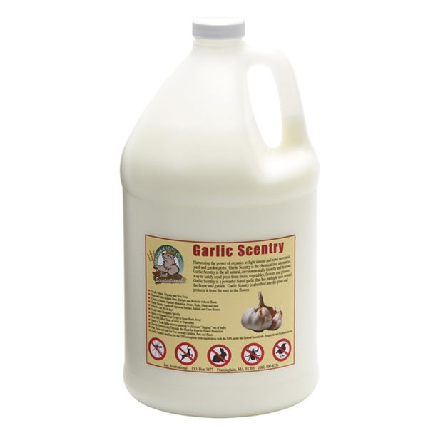 One Gallon Garlic Scentry Concentrate Formula