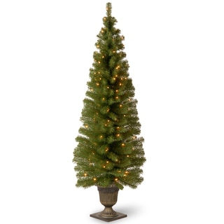 6-fott Montclair Spruce Entrance Tree with Clear Lights