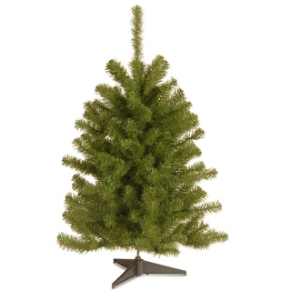 3-foot Eastern Spruce Tree
