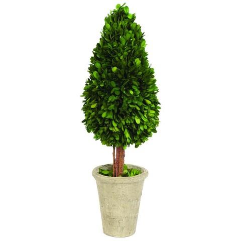 Sage & Co Water Drop Shape English Boxwood Topiary