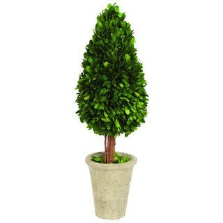 Sage & Co Water Drop Shape English Boxwood Topiary