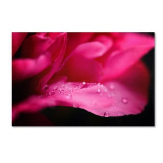 Philippe Sainte-Laudy 'Peony Drops' Canvas Art
