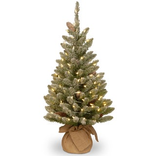 Snowy Concolor Fir Small Tree in Burlap