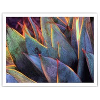 Dean Uhlinger 'Sun Succulent' Unwrapped Canvas - Multi