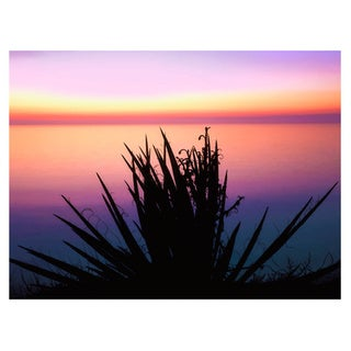 Dean Uhlinger 'Pacific Cliff Yucca' Unwrapped Canvas - Multi