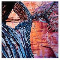 Dean Uhlinger 'In the Escalante' Unwrapped Canvas - Multi