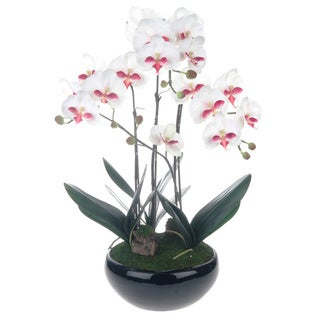 White Phalaenopsis Orchid Centerpiece