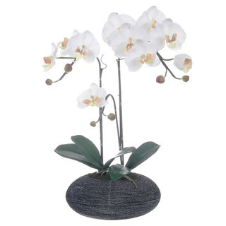 White Silk Phalaenopsis Orchid Centerpiece in Rock Base