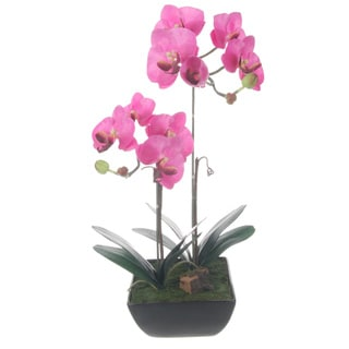 Lavender Phalaenopsis Orchids Centerpiece - Black