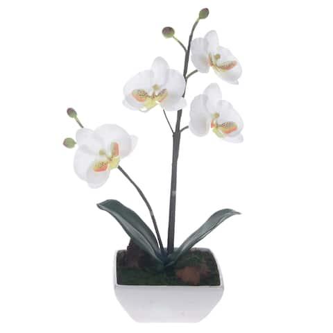Phalaenopsis Orchid Centerpiece - White