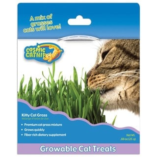 Our Pets Cosmic Kitty Cat Grass