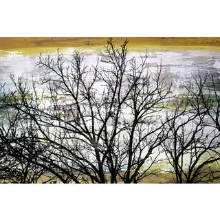 Barren Tree' Giclee on Canvas Wall Art