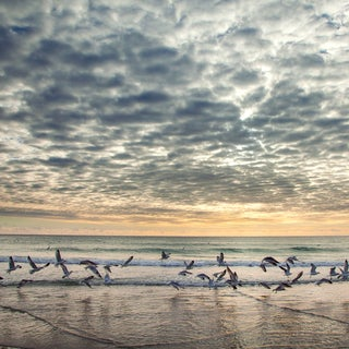 Flock at the Shore' Giclee on Canvas Wall Art