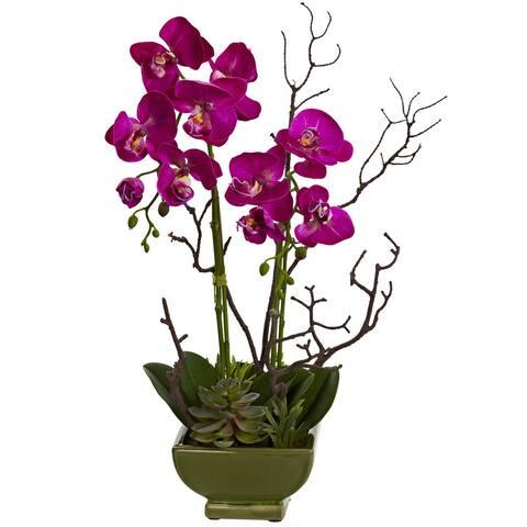 Orchid and Succulent Arrangement