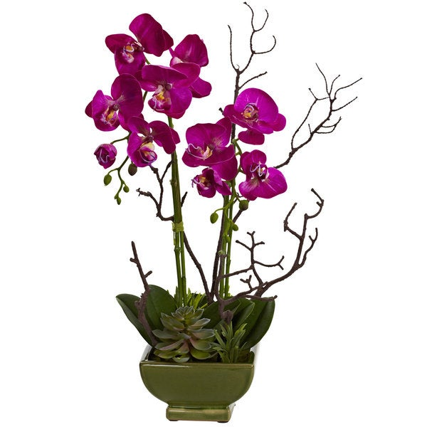 Orchid and Succulent Arrangement