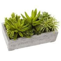 Succulent Garden with Concrete Planter