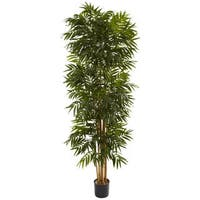 7.5-foot Phoenix Palm Tree