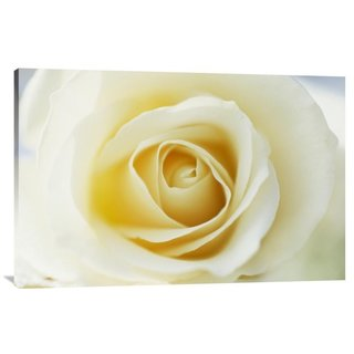 Big Canvas Co. Gerry Ellis 'Rose close up of white Rose in bloom' Canvas Art