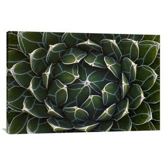 Global Gallery Ingo Arndt 'Queen Victoria's Agave, Saguaro National Park, Arizona' Canvas Art