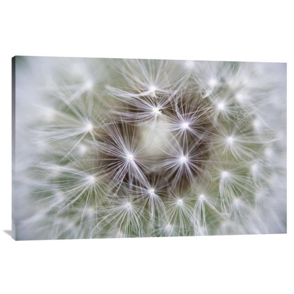 Global Gallery Konrad Wothe 'Dandelion seed head showing achenes, Bavaria, Germany' Canvas Art