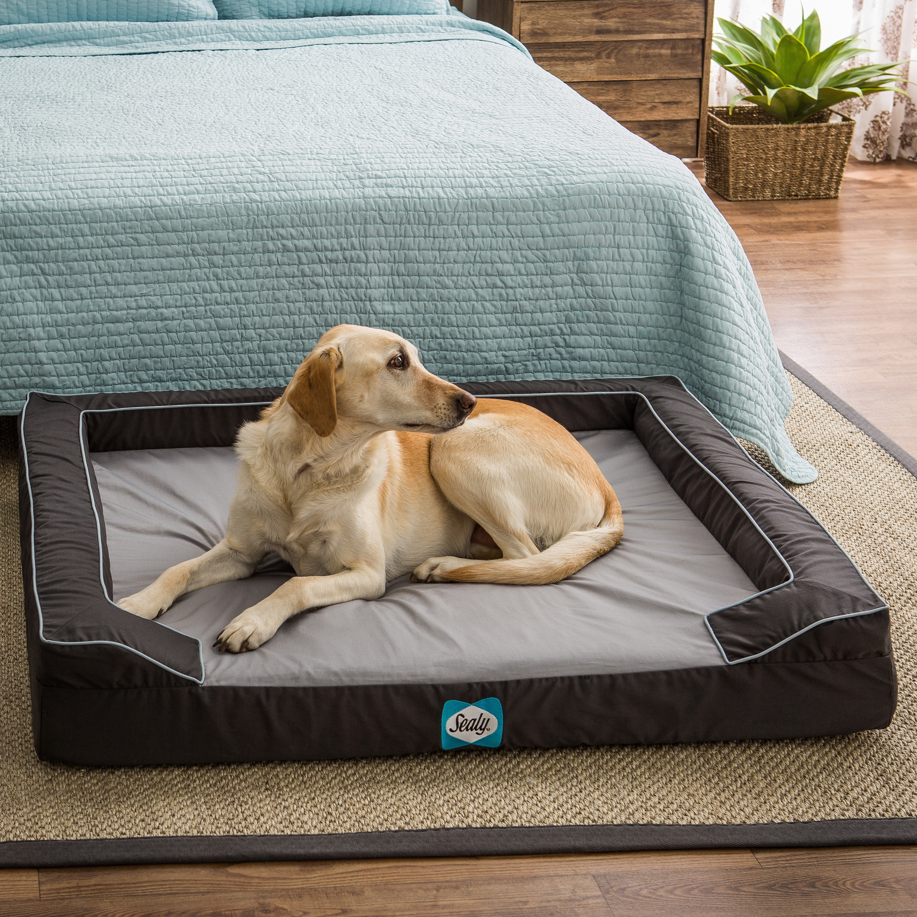 Sealy Lux Extra Large Memory Foam Pet Bed Overstock 9615030