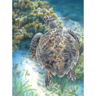 """Color Pencil By Number Kit 8.75""""X11.75""""-Sea Turtle"""
