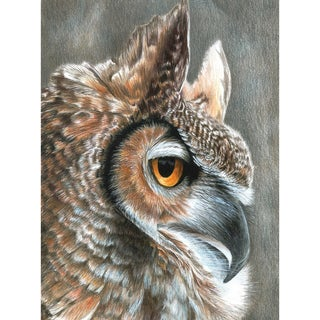 """Color Pencil By Number Kit 8.75""""X11.75""""-Sepia Owl"""