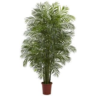 7.5-foot Indoor/ Outdoor Areca Palm
