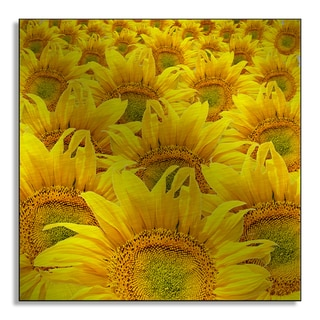Gallery Direct Robert's 'Field of Sunflowers' Metal Art