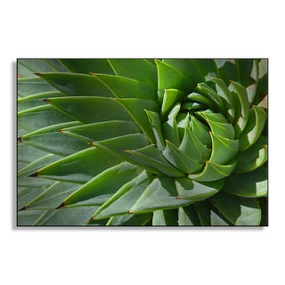 Gallery Direct D Preezg's 'Aloe Spiral' Metal Art