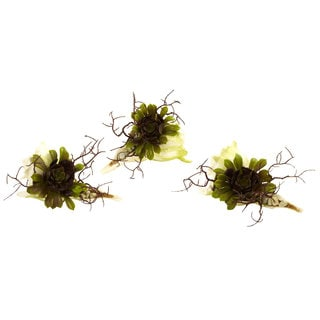 Nearly Natural Wispy Succulent w/Seashell Decorations (Set of 3)