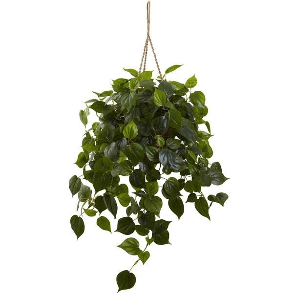 Philodendron Hanging Basket Uv Resistant Indoor Outdoor