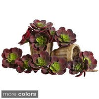 Echeveria Succulent Plant (Set of 12)
