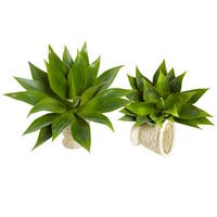 17-inch Agave Succulent Plant (Set of 2)