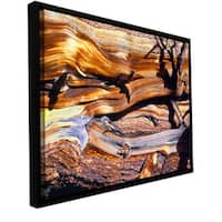 ArtWall Dean Uhlinger 'Ancient Bristlecone' Floater Framed Gallery-wrapped Canvas