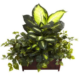 Golden Dieffenbachia, Philo and Pothos Silk Plant in Wood Planter